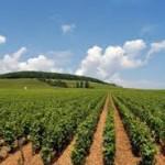 Αγροτικός τομέας